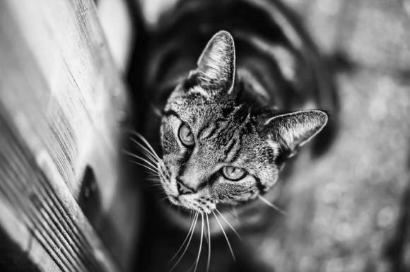 Fotos de gatos 12