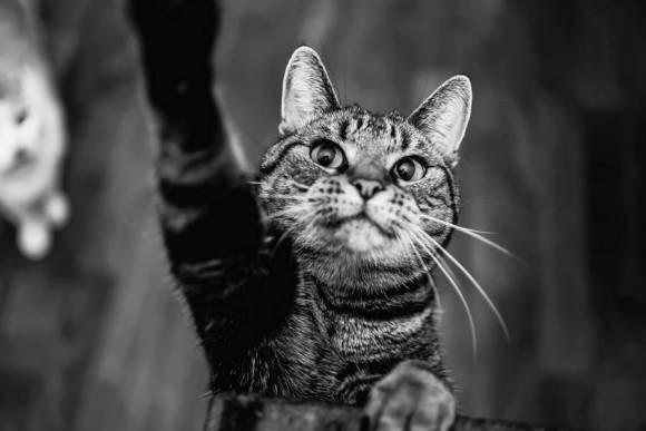 Fotos de gatos 15