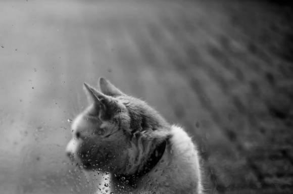 Fotos de gatos 2