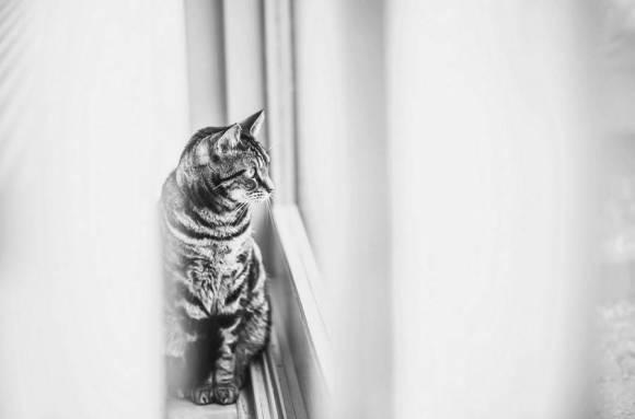 Fotos de gatos 8