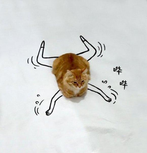 Desenhos sobre a foto de um gato 11 - Sofia