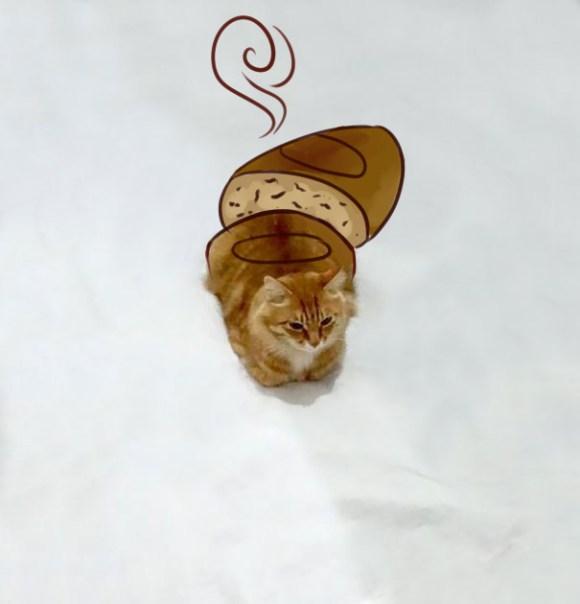 Desenhos sobre a foto de um gato 13 - Simona Pavlovic