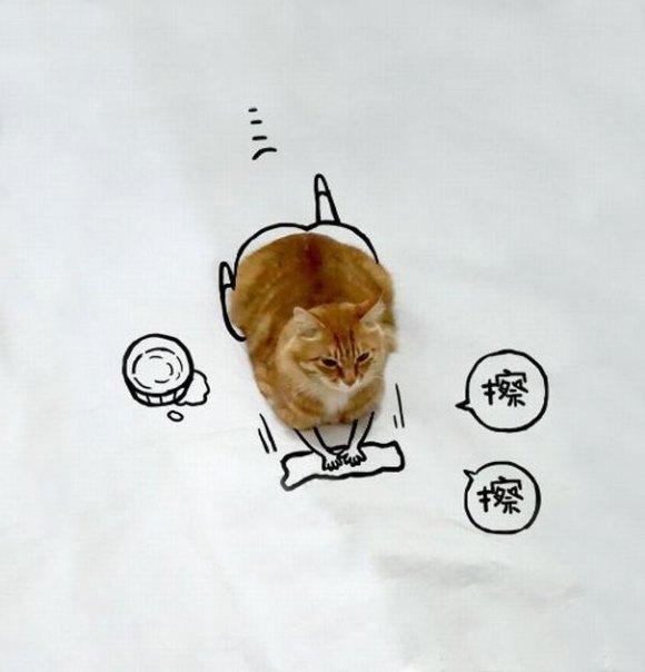 Desenhos sobre a foto de um gato 5 - Sofia
