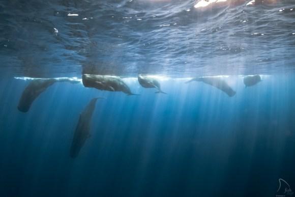 Mergulhando com baleias 7