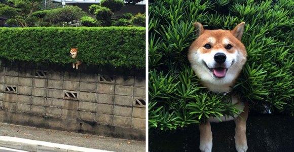 Esses cachorros fizeram o impossível para dar uma olhadinha na rua