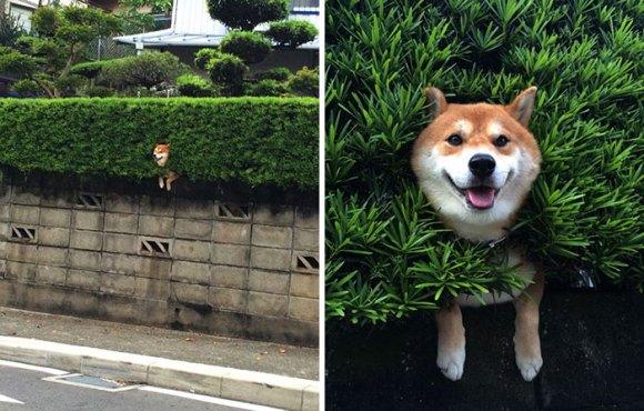 Cachorros que gostam de olhar a rua 1