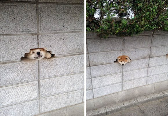 Cachorros que gostam de olhar a rua 10