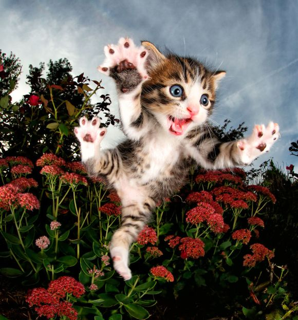 filhotes-de-gato-1