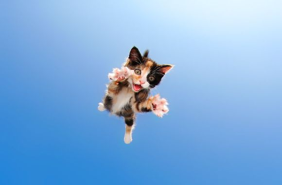 filhotes-de-gato-8