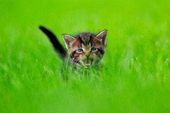 filhotes-de-gato-9