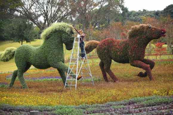 Cavalos de moisaicultura
