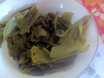 yunnan_mao_feng_wet_leaves