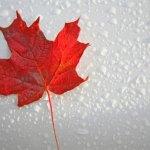 カナダバンクーバーのおしゃれなお土産おすすめ7選!