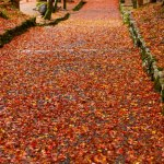 滋賀県紅葉の穴場「鶏足寺」へ見ごろの紅葉を見に行って来ました!
