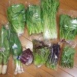 高知県香美市からふるさと納税の季節の無農薬野菜セットが届きました!