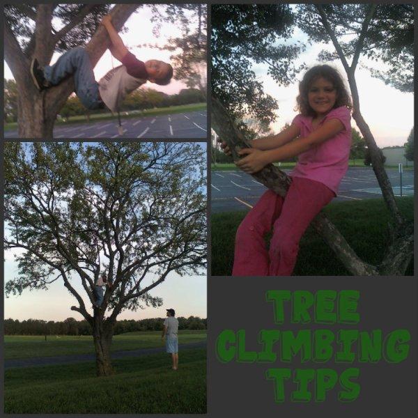 tree climbing Collage