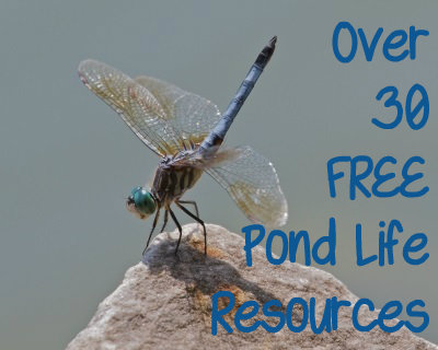 30 pond life resources