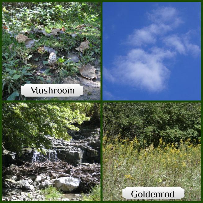 mushroom goldenrod cloud waterfall