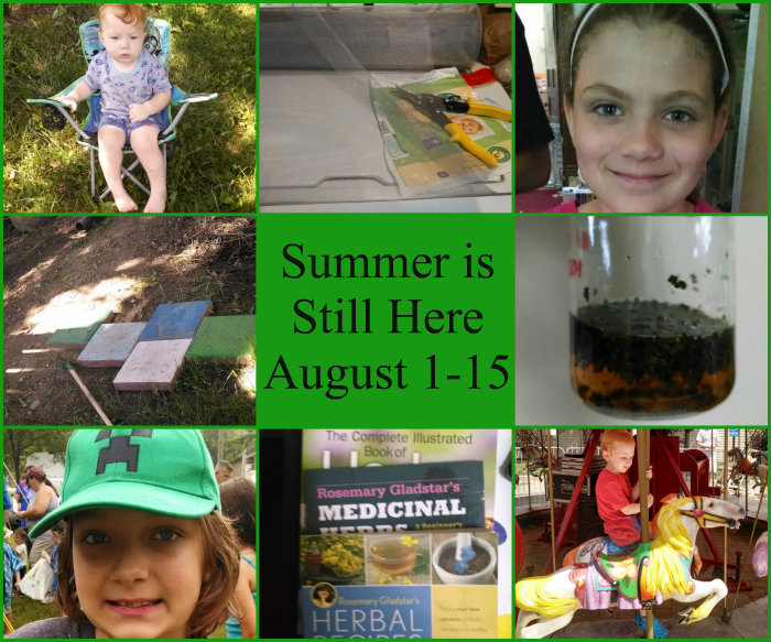 Summer August 1-15