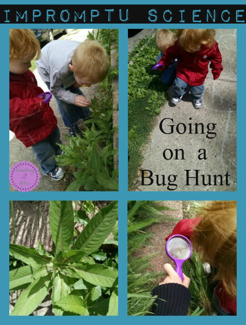 Impromptu Science Bug hunt