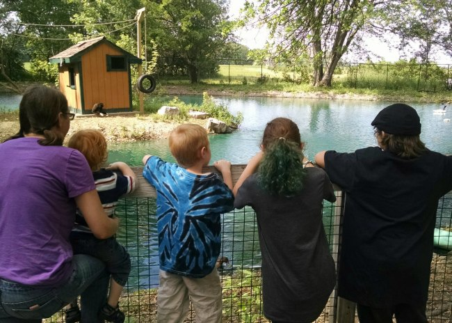 Walk Through Animal Safari Family at Fence