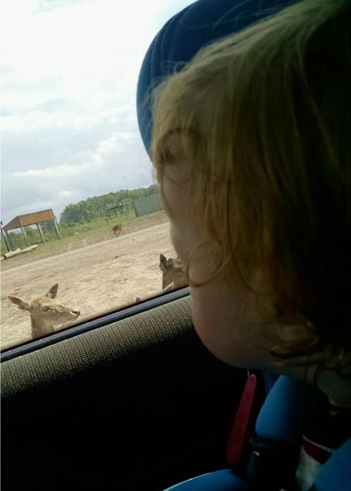 baby looking at African safari animals