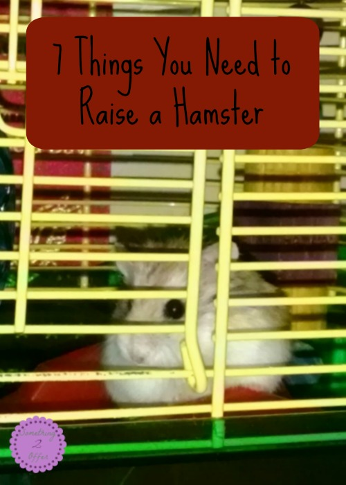 7 Things You Need to Raise a Hamster