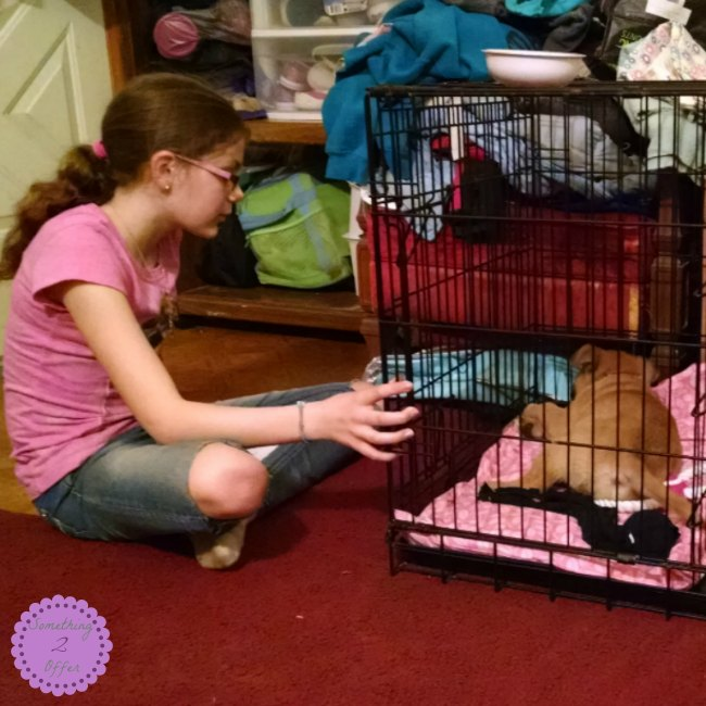Bayley and Princess in crate