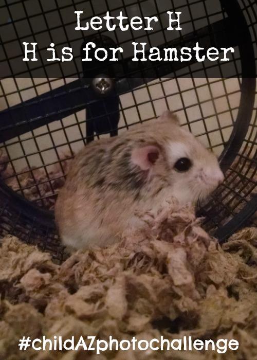 Letter H H is for Hamster