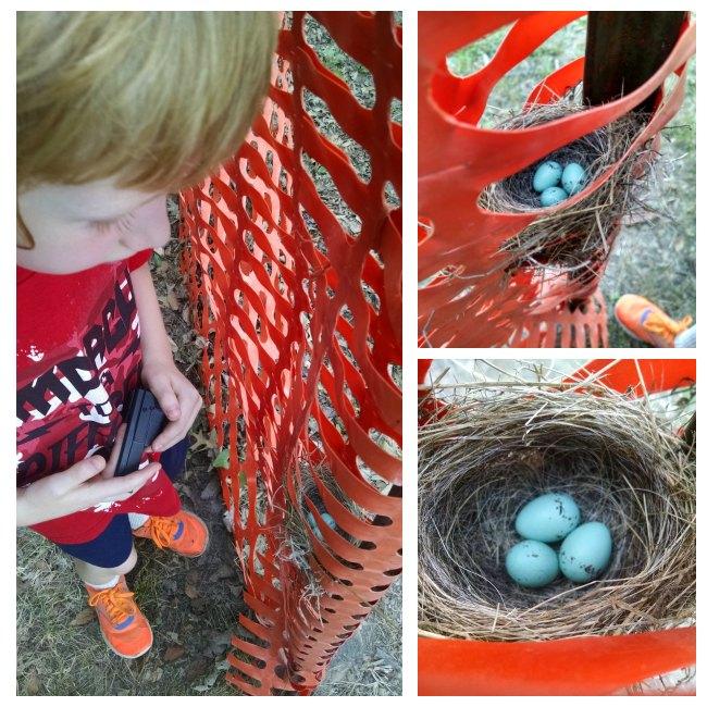127 Yard Sale Nest