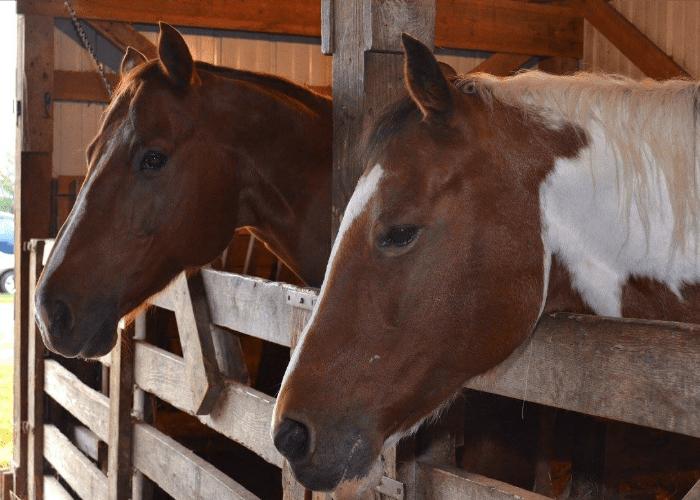 Operation Rebirth horses