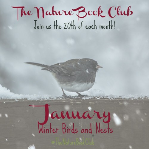 January Winter Birds and Nests TNBC