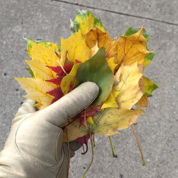 Handful of leaves gloved hand