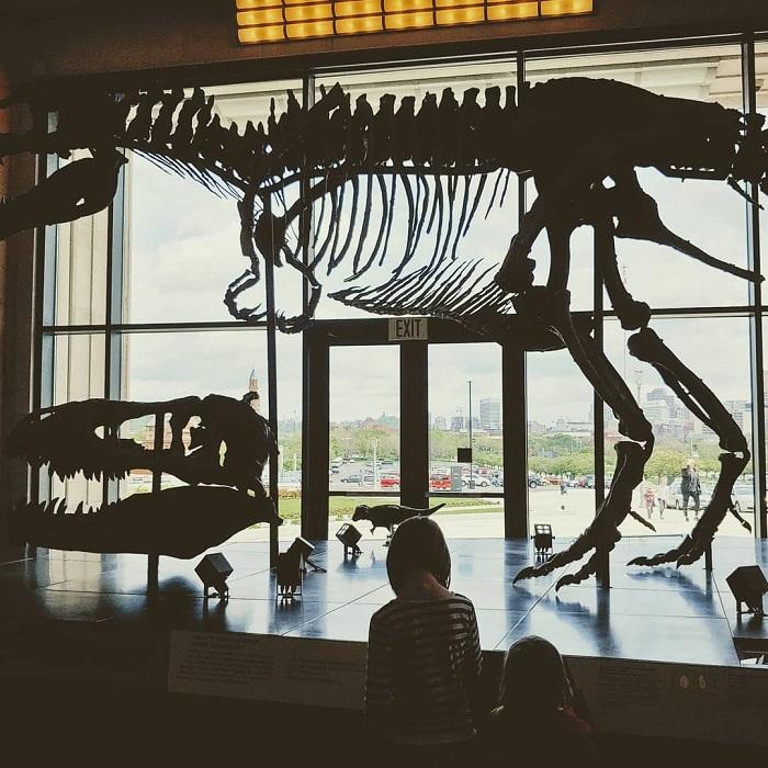 dinosaur bones whole life unschooling