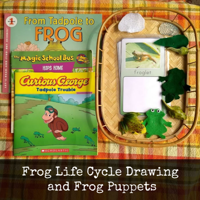 frog life cycle books and puppets