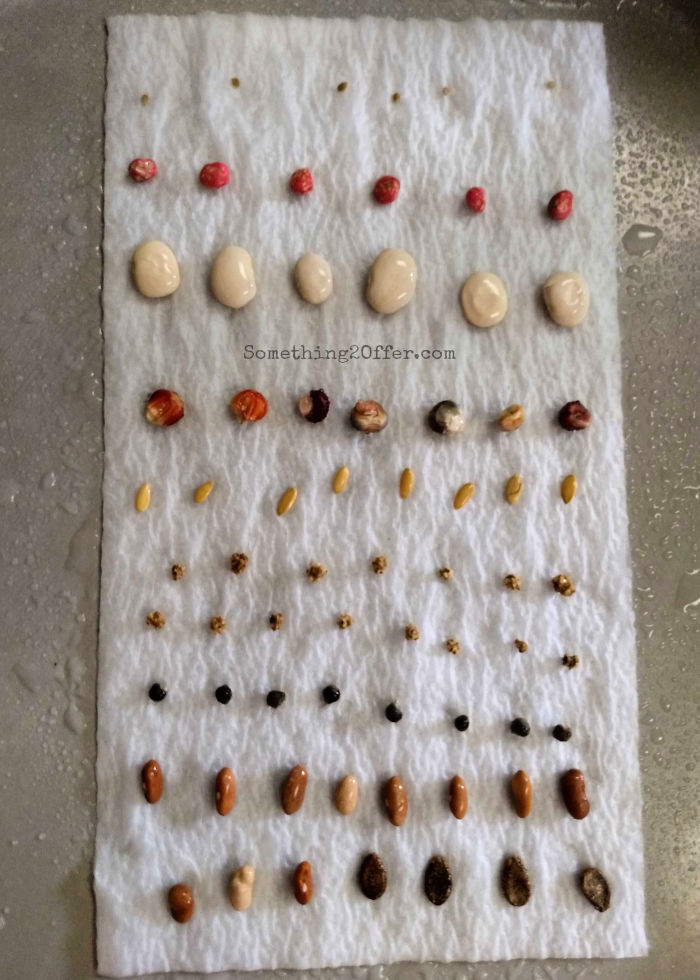 Seeds on a tray