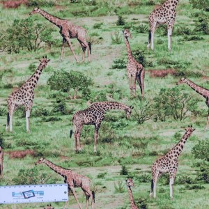 Patchwork Quilting Sewing Fabric AFRICAN GIRAFFE Material 50x55cm FQ Allover New