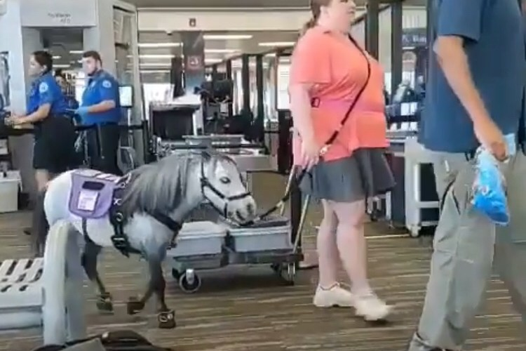 Woman brings pony on plane