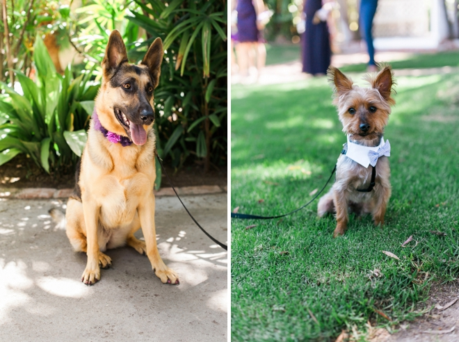 dogs in a wedding