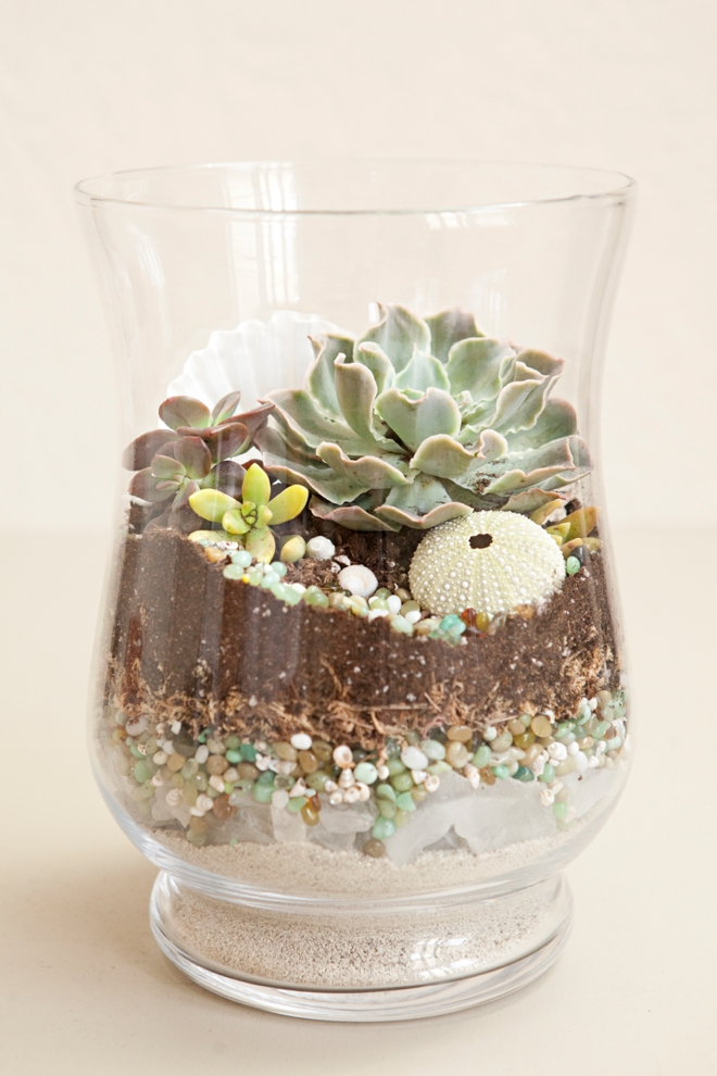 DIY terrarium with seashells and sea glass