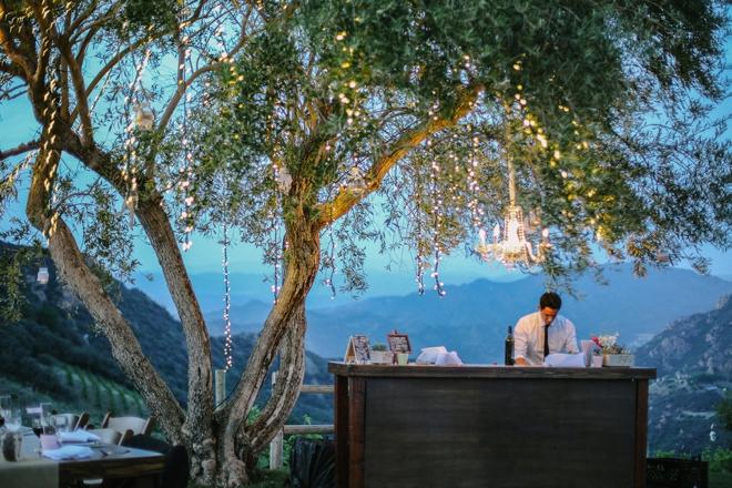 Twinkle lights in the vineyard