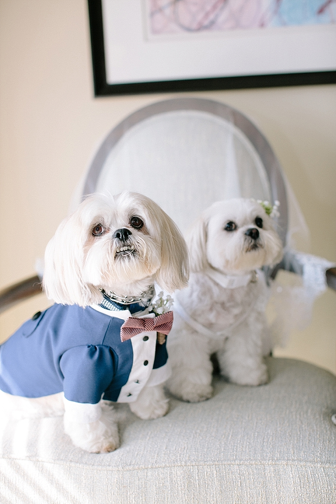 We can't get over these adorable pups and their ceremony outfits!