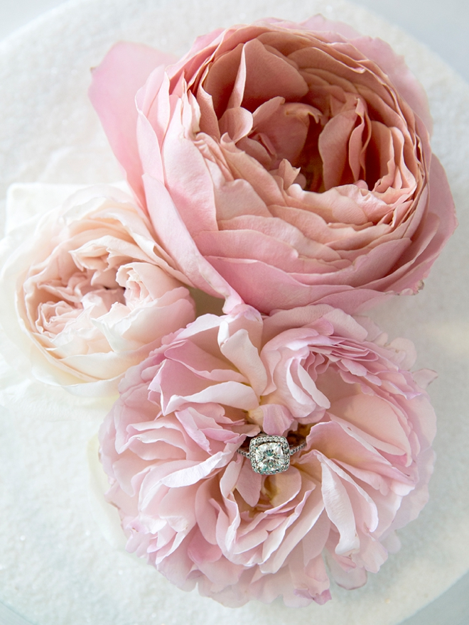 Gorgeous wedding ring shot in the middle of a stunning garden rose!