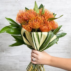 Everything you need to know about using pin cushion protea in your wedding!