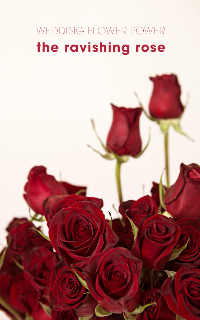 This article shares everything you'll need to know about using red roses in your wedding!
