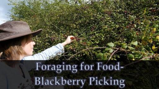 Jo Goes Foraging for Blackberries