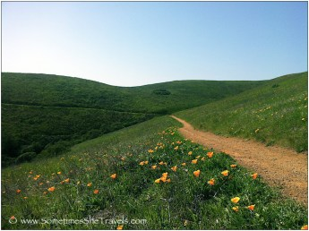dirt trail through green hills and poppies