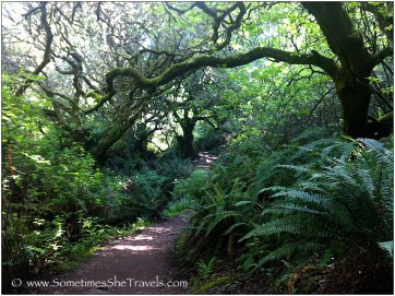 Hiking trail lined with ferns and trees