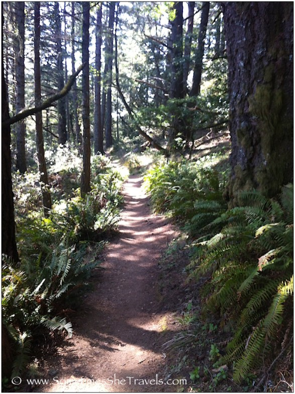 Trail through forest and ferns