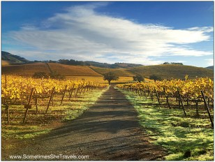 The hills in the Sonoma Valley are beautiful in the autumn.